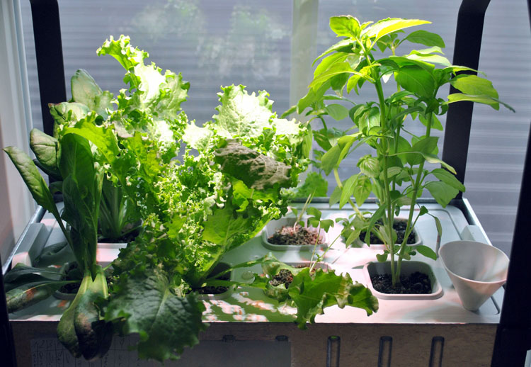 Krydda V Xer Hydroponics System From Ikea Upgraded With