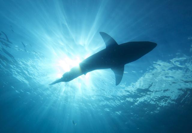 Shark 2 640x0