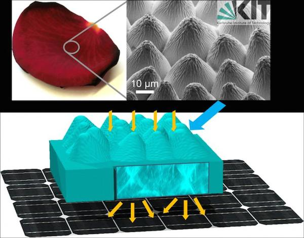 Solar cell efficiency rose petal