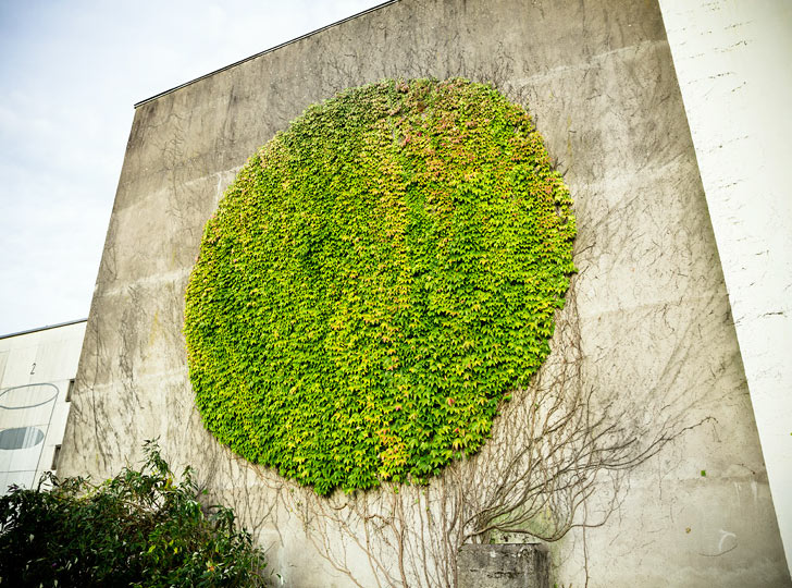 spy-wall-art-botanical
