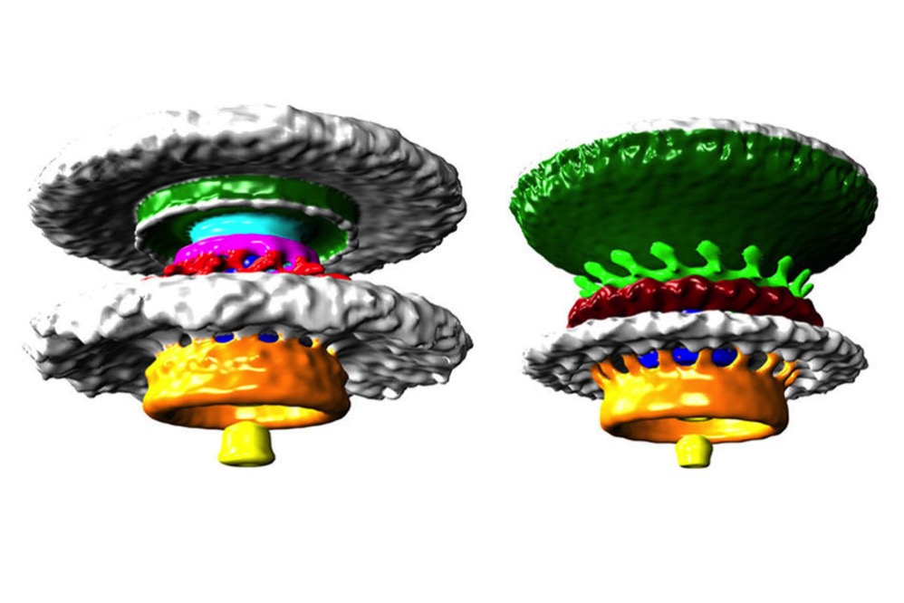 Bacteria wheels