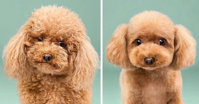 Dog grooming photography fb2 700 png