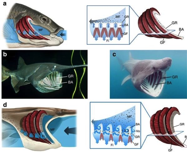 Researchers develop clog resistant filtration system inspired by 3d printed fish mouths 4
