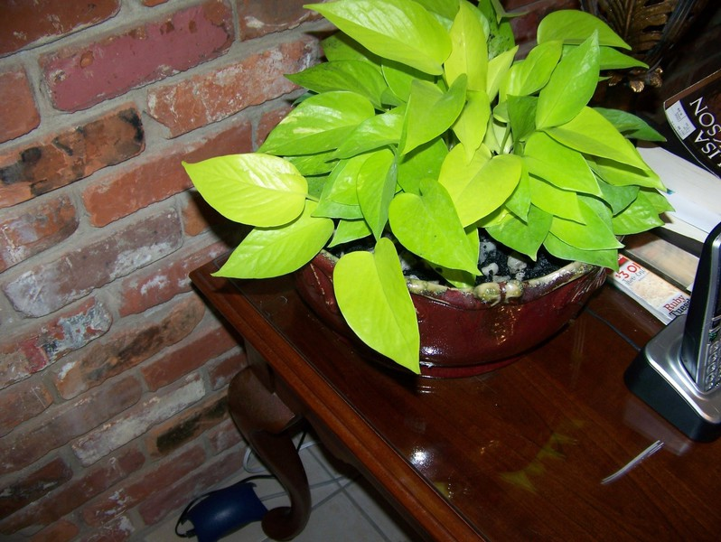 PlantPhoto
