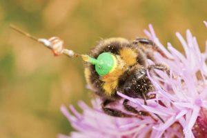 SC1608_bees