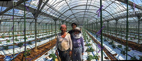 Cucumber farmer 3