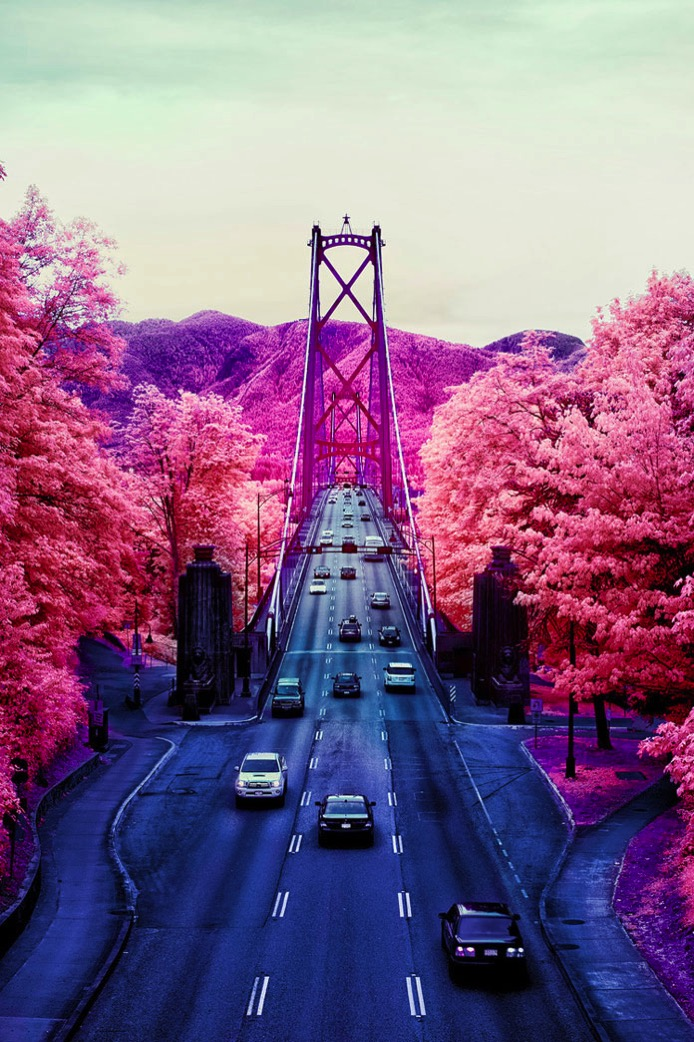 Aerochrome infrared photography of Lions Gate Bridge