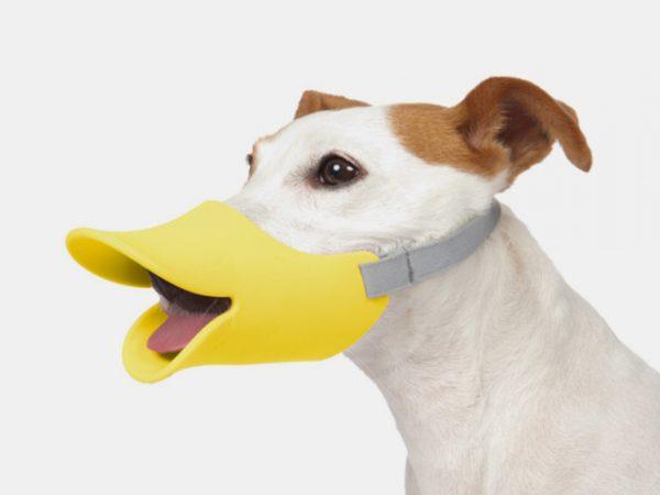 duck-muzzle