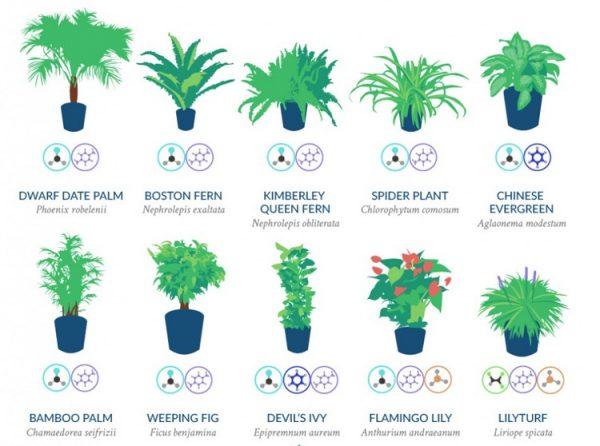 houseplants0