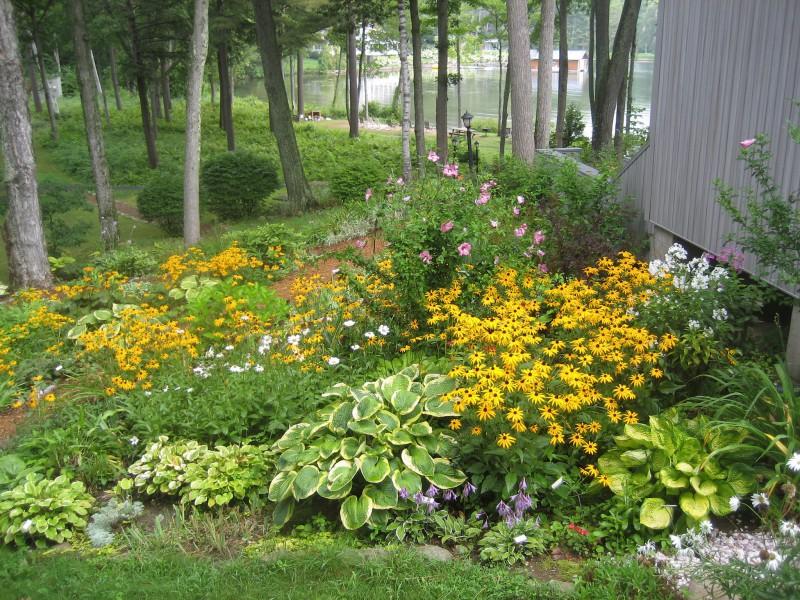 Native Flowers for Habitat