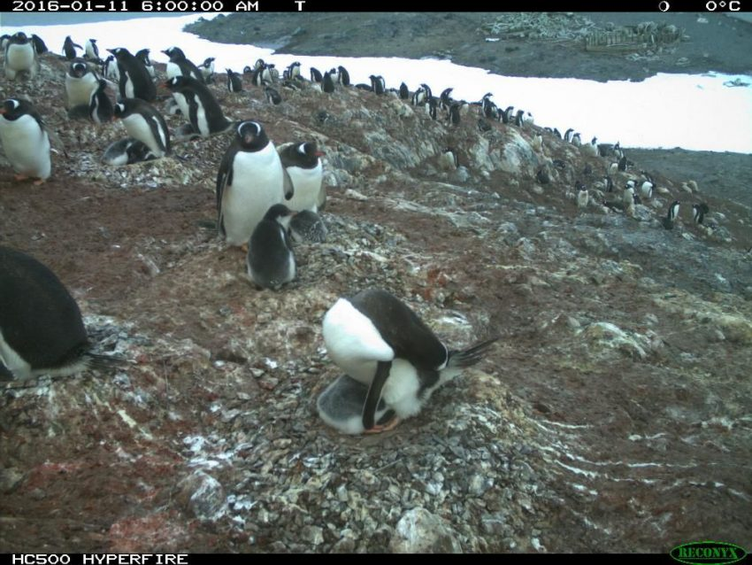 Penguin Watch Zooniverse Project