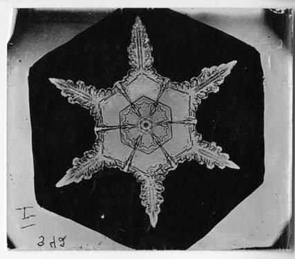 Snowflake by Wilson Bentley