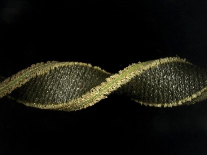 FabricSensor art