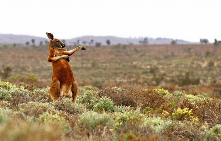 Wildlife culturainquieta jpg3