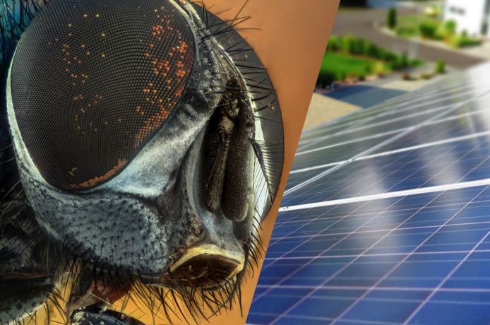 Compound eyes solar PV perovskites