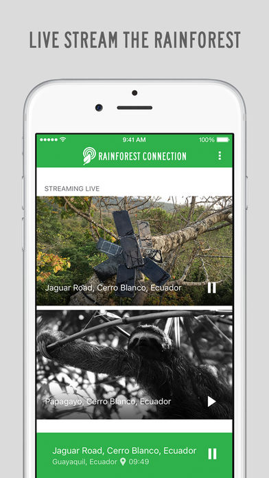 Rainforest Connection App