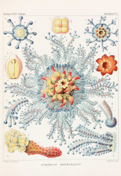 These Gorgeous 19th Century Drawings Of Microbes Are Science And Art 2