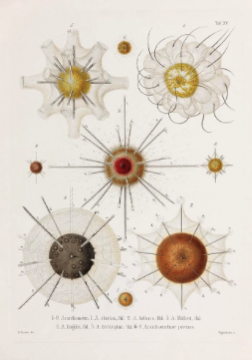 These Gorgeous 19th Century Drawings Of Microbes Are Science And Art 3