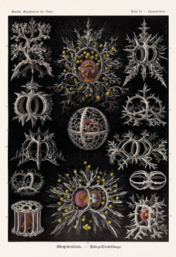 These Gorgeous 19th Century Drawings Of Microbes Are Science And Art