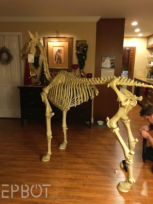 Life Size Halloween Skeleton