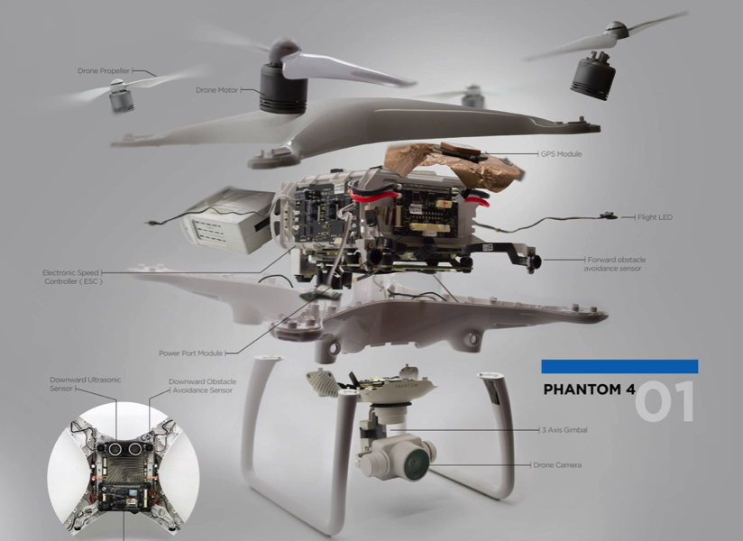 The Anatomy of a Drone Dronefly