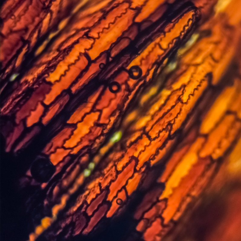 The Magic of the Microscopic World Scientific American
