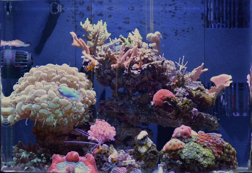 reef pi an opensource reef tank controller based on raspberry pi
