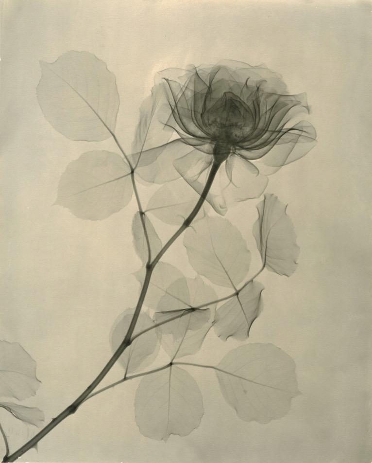 Tasker A Rose 1936 768x953