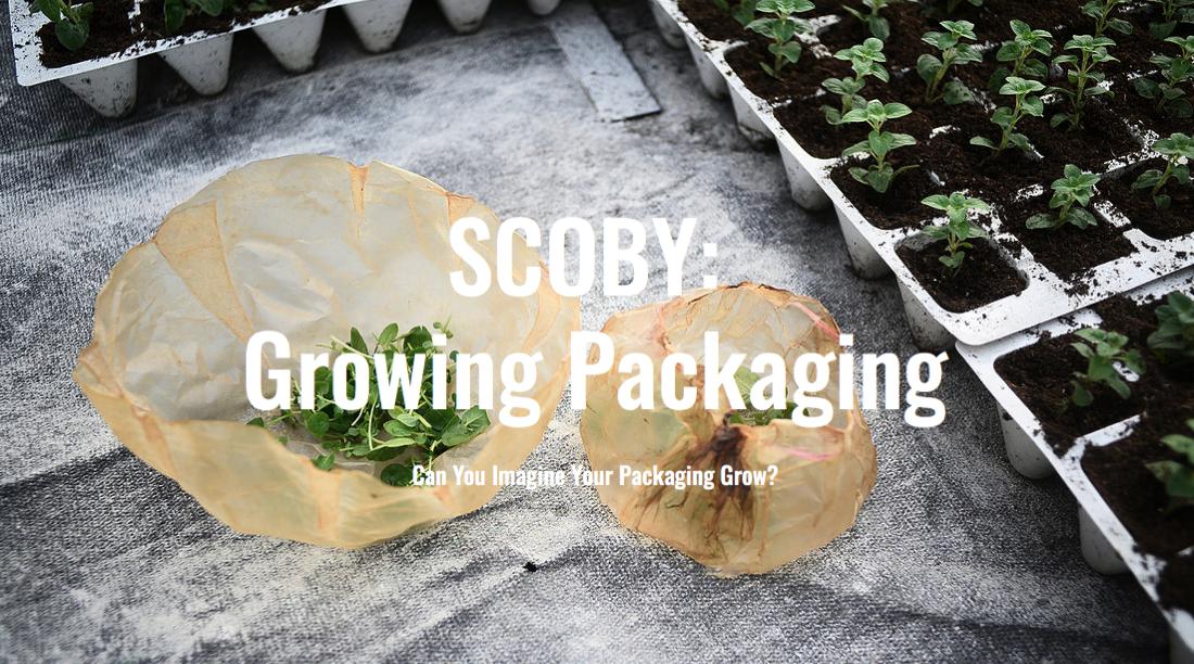 Edible Packaging Roza Janusz Scoby Growing Packaging Roza Janusz
