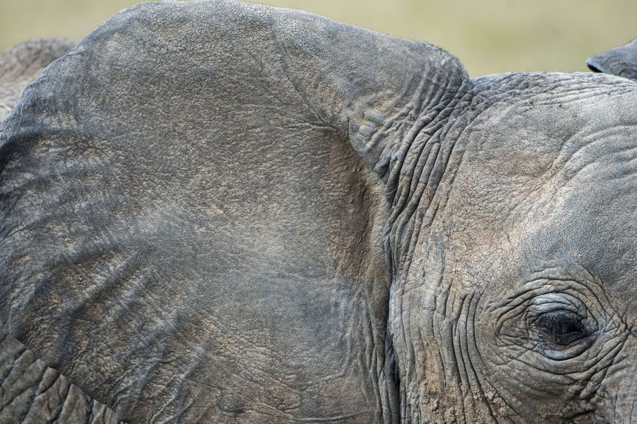 AI Equipped Cameras Will Help Spot Poachers