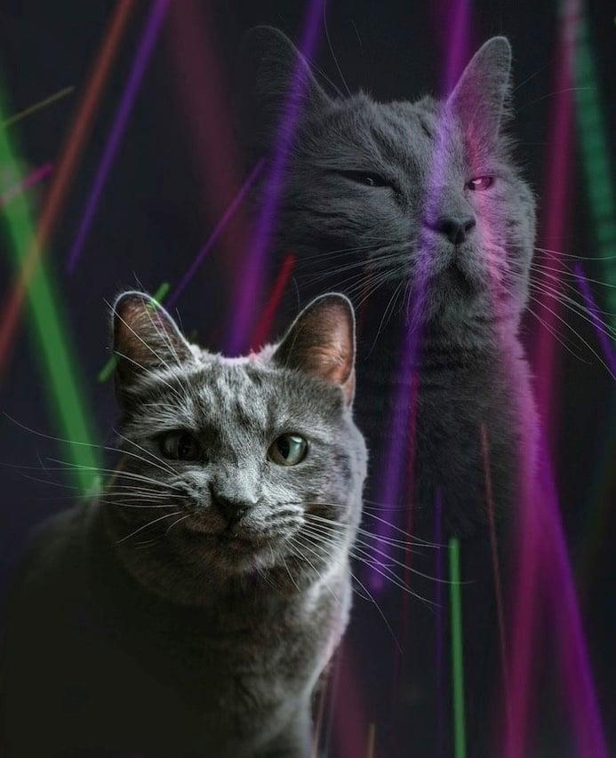 Funny cat photoshoot 2