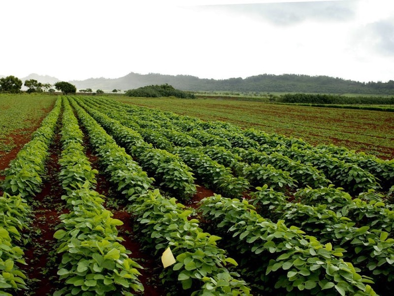 Smart Water Management System for Developing Farmers @Raspberry_Pi