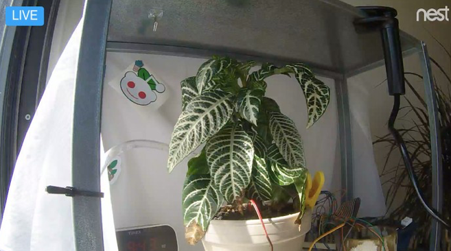 The Internet Has Spent Three Years Taking Care Of This Guy s Plants VICE