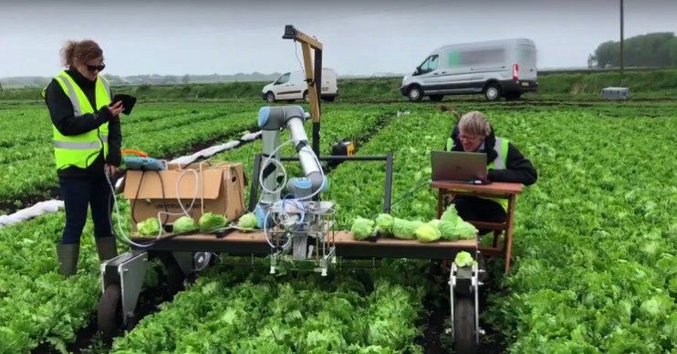Cambridge robotlettuce resize md