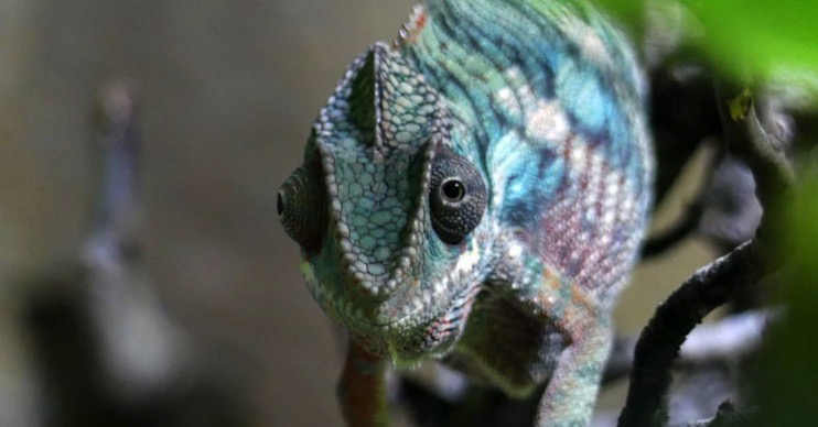 New Artificial 'Chameleon Skin' Changes Color when Exposed