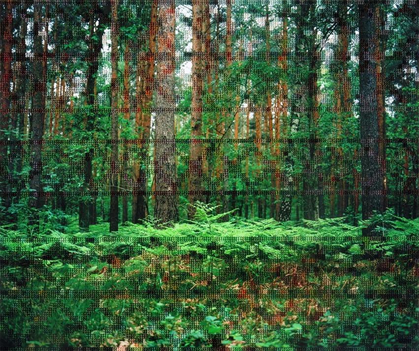 27 Forest Border Area Near Hohen Neuendorf 768x642 2x