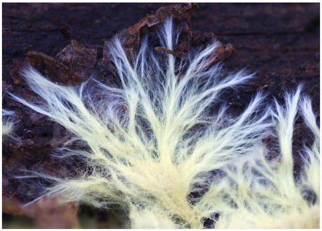 Mycelium Strands