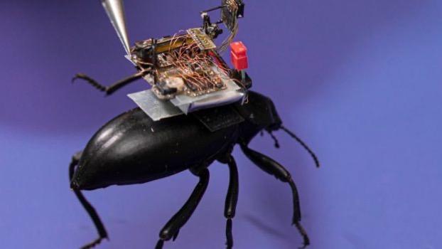 113483603 beetle2