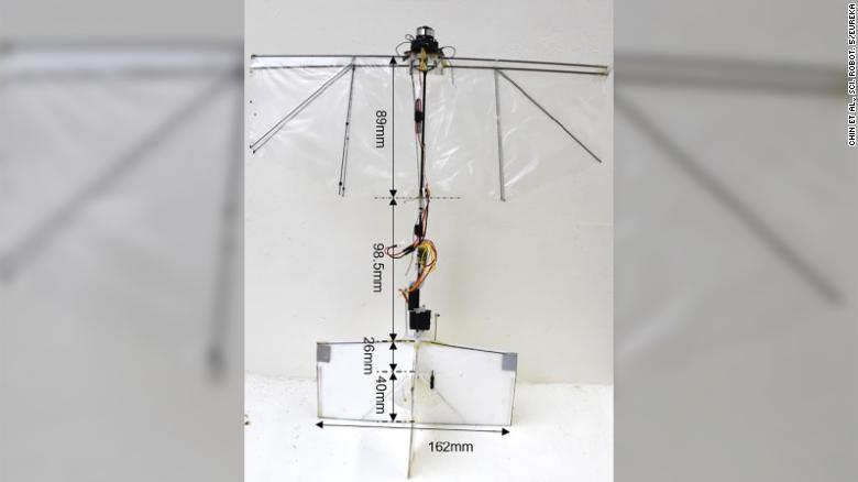 200721074528 new bird robot intl scli exlarge 169
