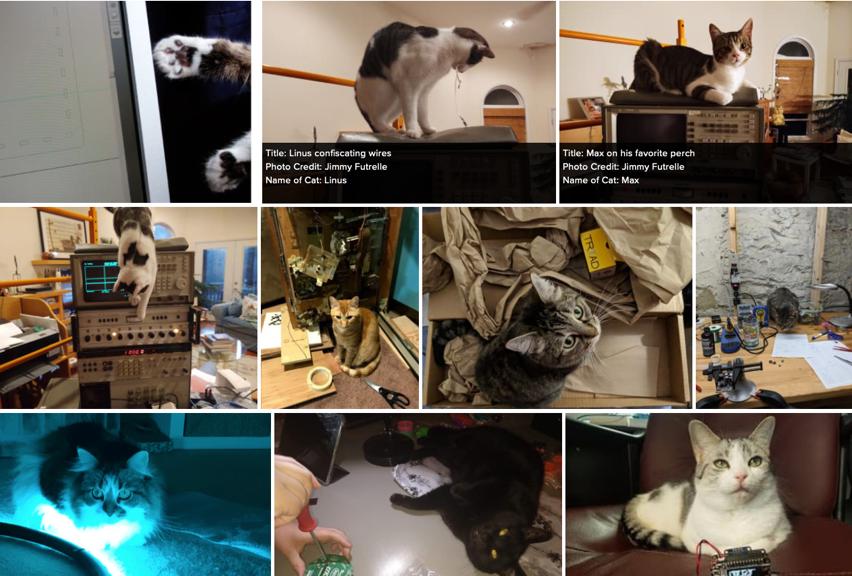 Cats of Engineering