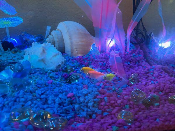 Aquarium with submersible lights