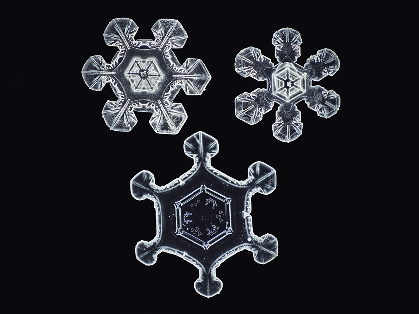 No Two Alike snowflake Nathan Myhrvold modernist cuisine 1
