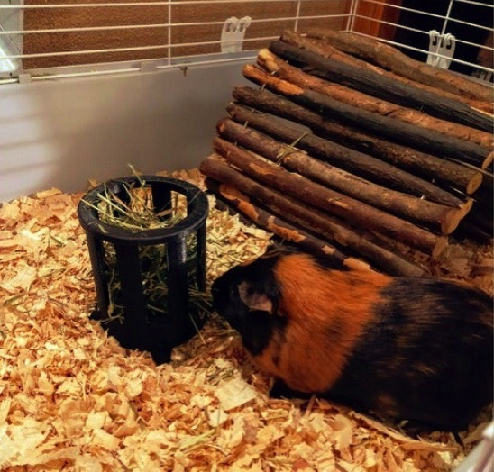 Guinea Pig Hay Feeder by DareCdn Thingiverse