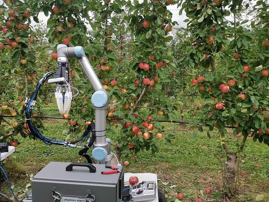 Apple Harvesting Robot WEB