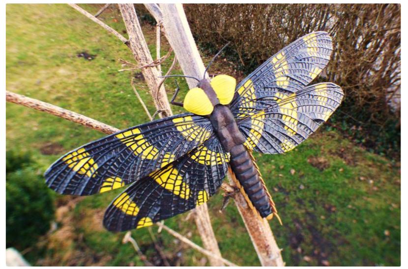 Palaeodictyoptera by MartinKJHB Thingiverse