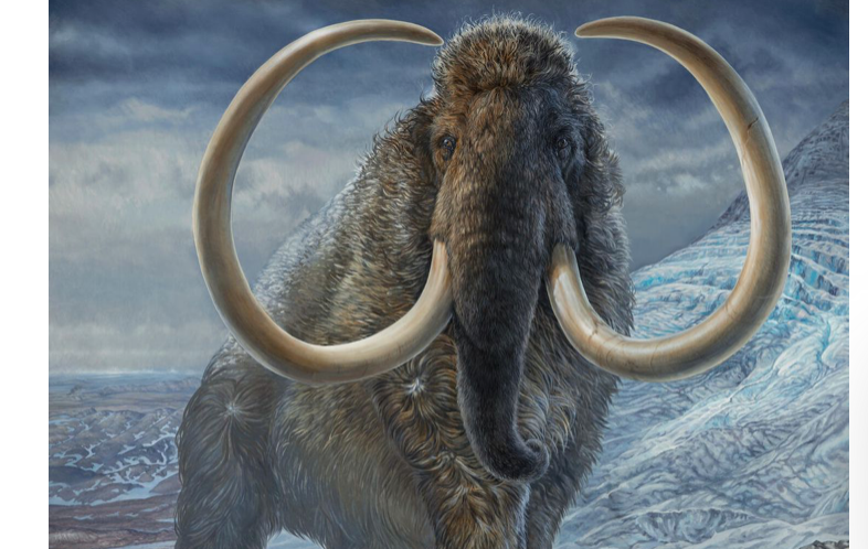 Scientists mapped an ancient woolly mammoth s wide wanderings sad fate CNET
